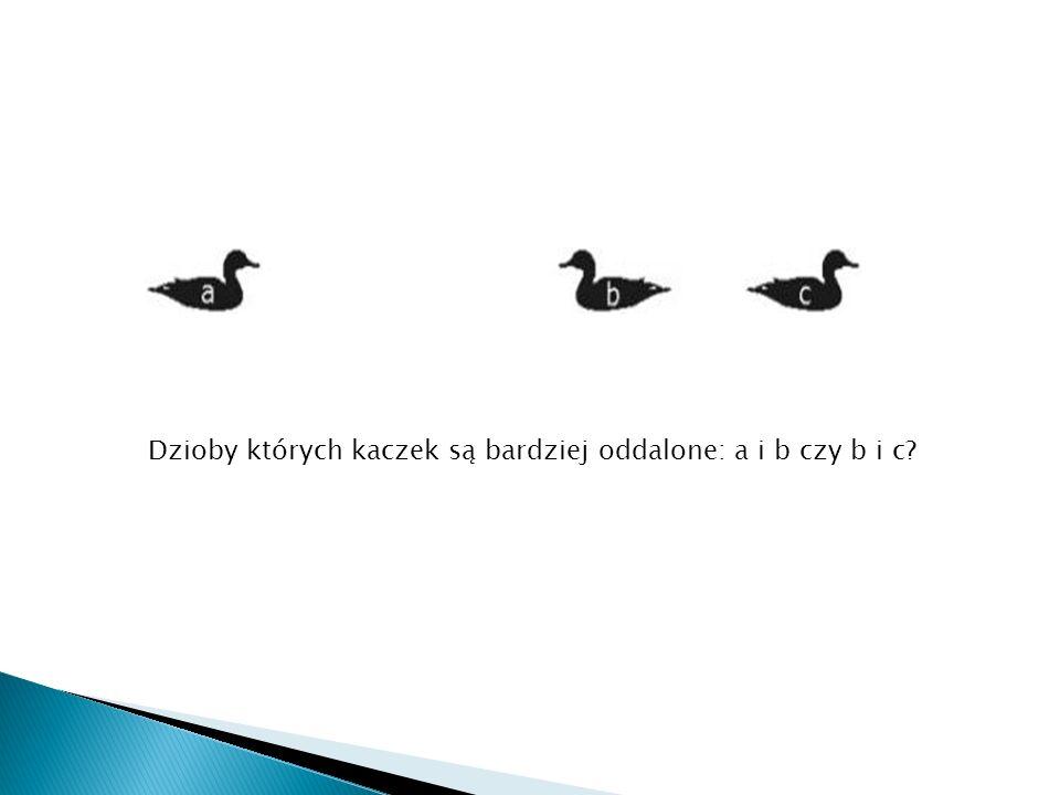 Dzioby których kaczek są bardziej oddalone: a i b czy b i c