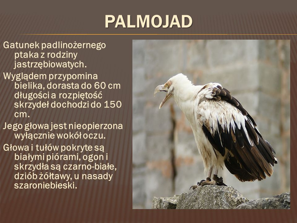Palmojad