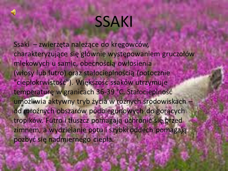 SSAKI Ssaki – zwierzęta należące do kręgowców,