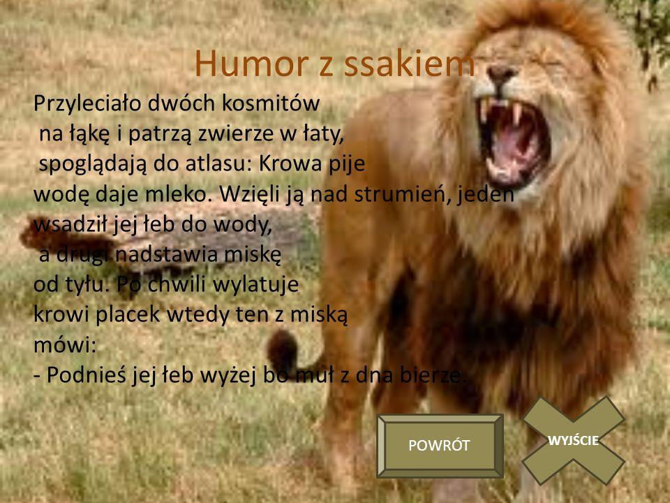 Humor z ssakiem