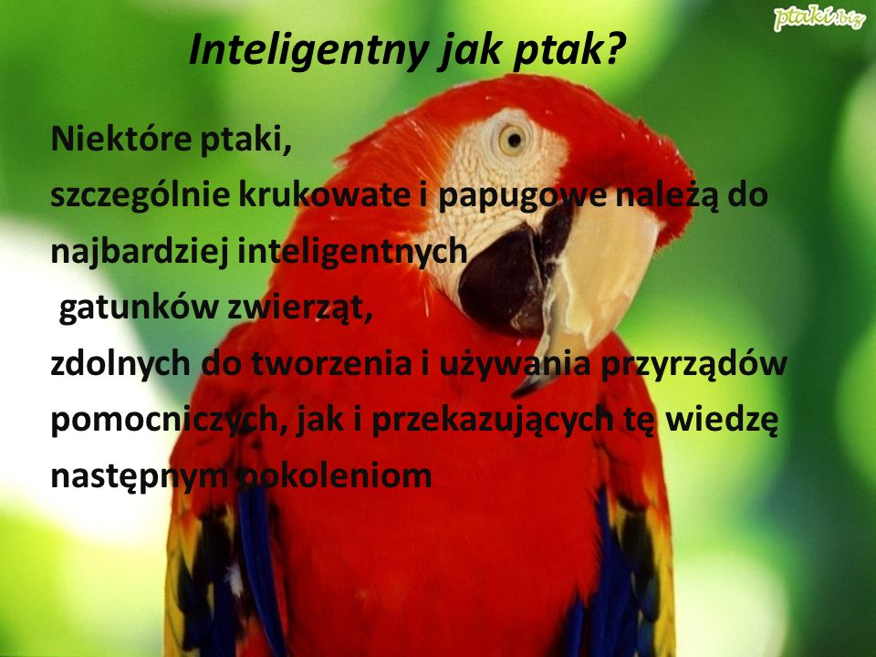 Inteligentny jak ptak