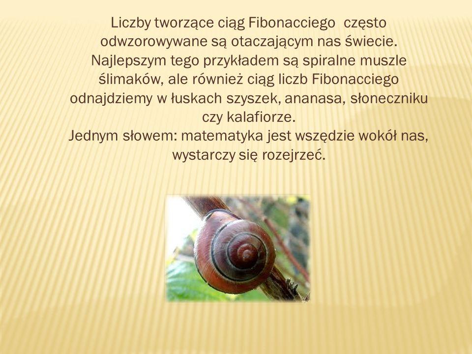 Liczby tworzące ciąg Fibonacciego często odwzorowywane są otaczającym nas świecie. Najlepszym tego przykładem są spiralne muszle ślimaków, ale również ciąg liczb Fibonacciego odnajdziemy w łuskach szyszek, ananasa, słoneczniku czy kalafiorze.