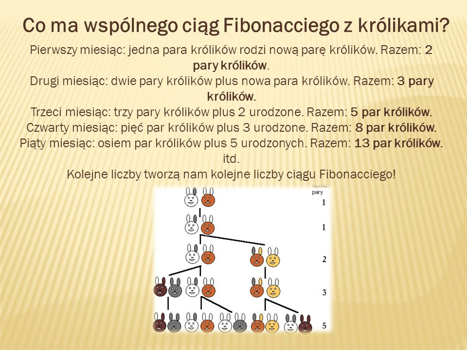 Co ma wspólnego ciąg Fibonacciego z królikami