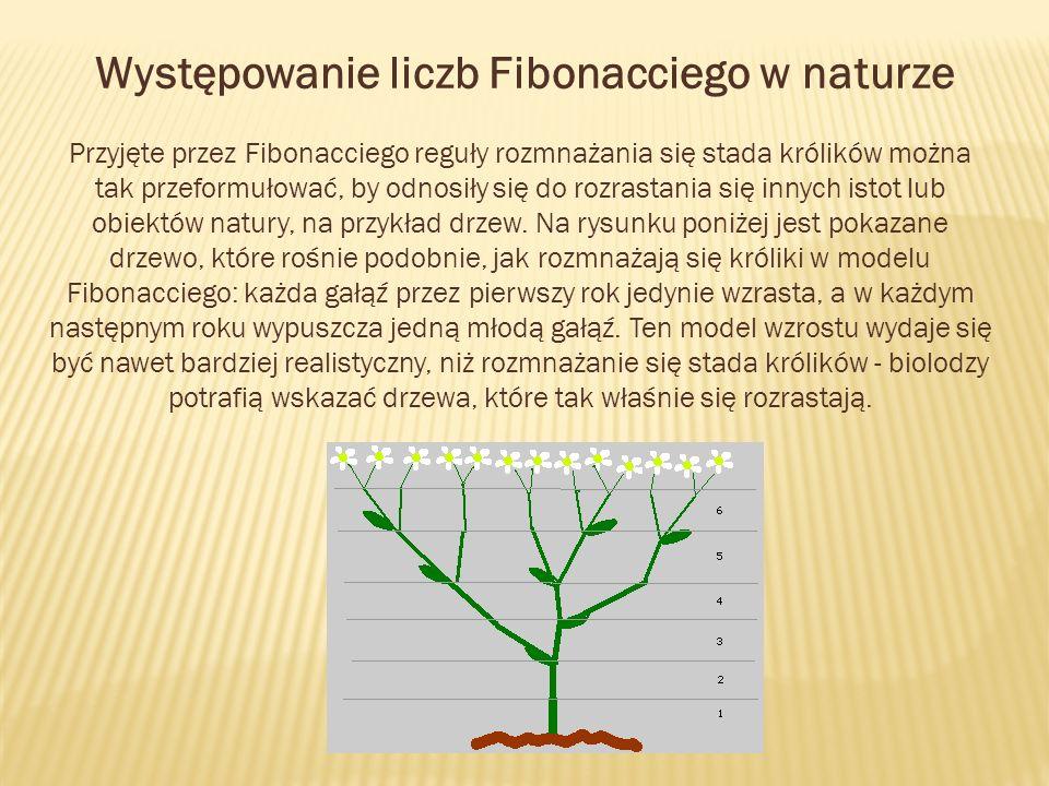 Występowanie liczb Fibonacciego w naturze