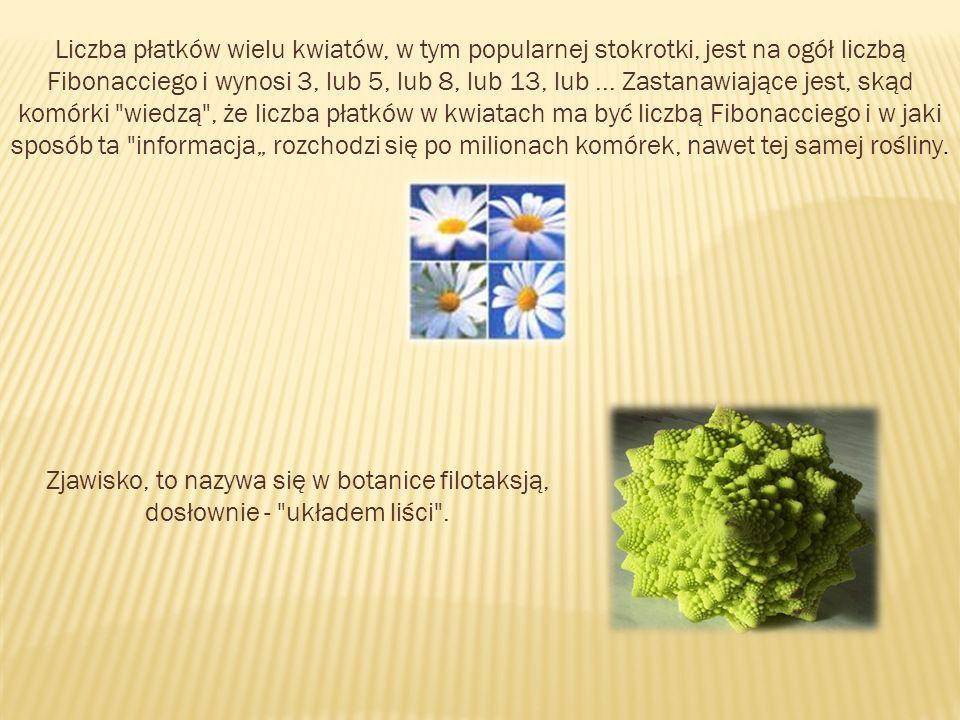 """Liczba płatków wielu kwiatów, w tym popularnej stokrotki, jest na ogół liczbą Fibonacciego i wynosi 3, lub 5, lub 8, lub 13, lub ... Zastanawiające jest, skąd komórki wiedzą , że liczba płatków w kwiatach ma być liczbą Fibonacciego i w jaki sposób ta informacja"""" rozchodzi się po milionach komórek, nawet tej samej rośliny."""