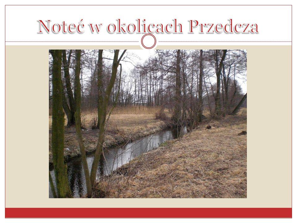 Noteć w okolicach Przedcza