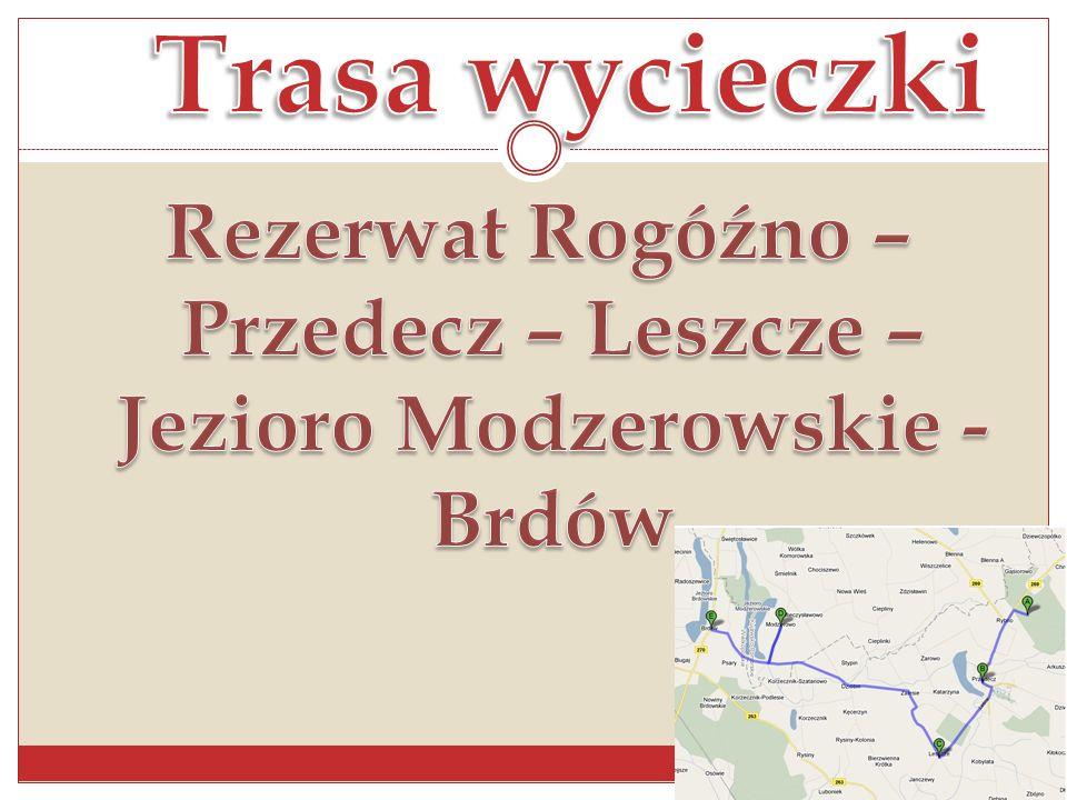 Rezerwat Rogóźno – Przedecz – Leszcze – Jezioro Modzerowskie - Brdów