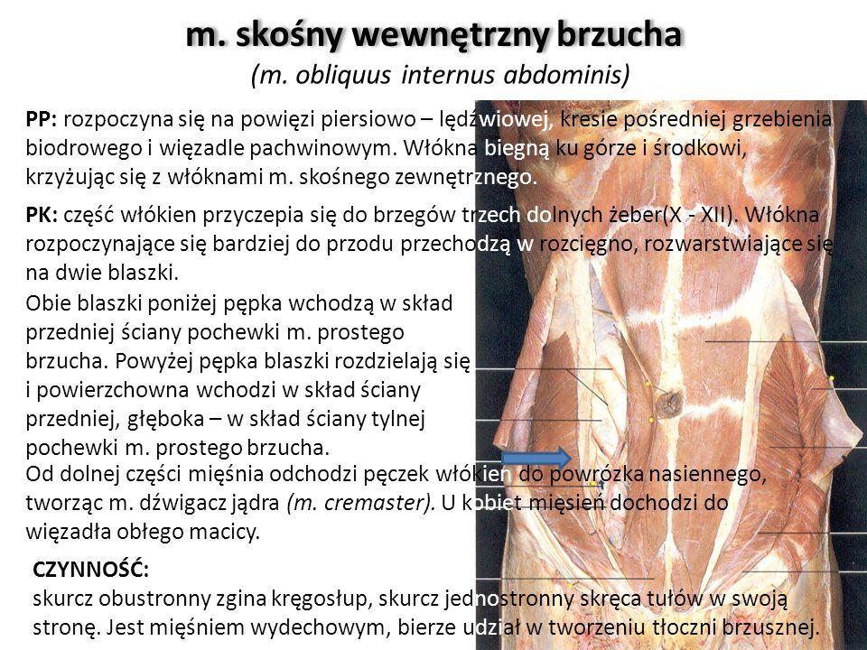 m. skośny wewnętrzny brzucha