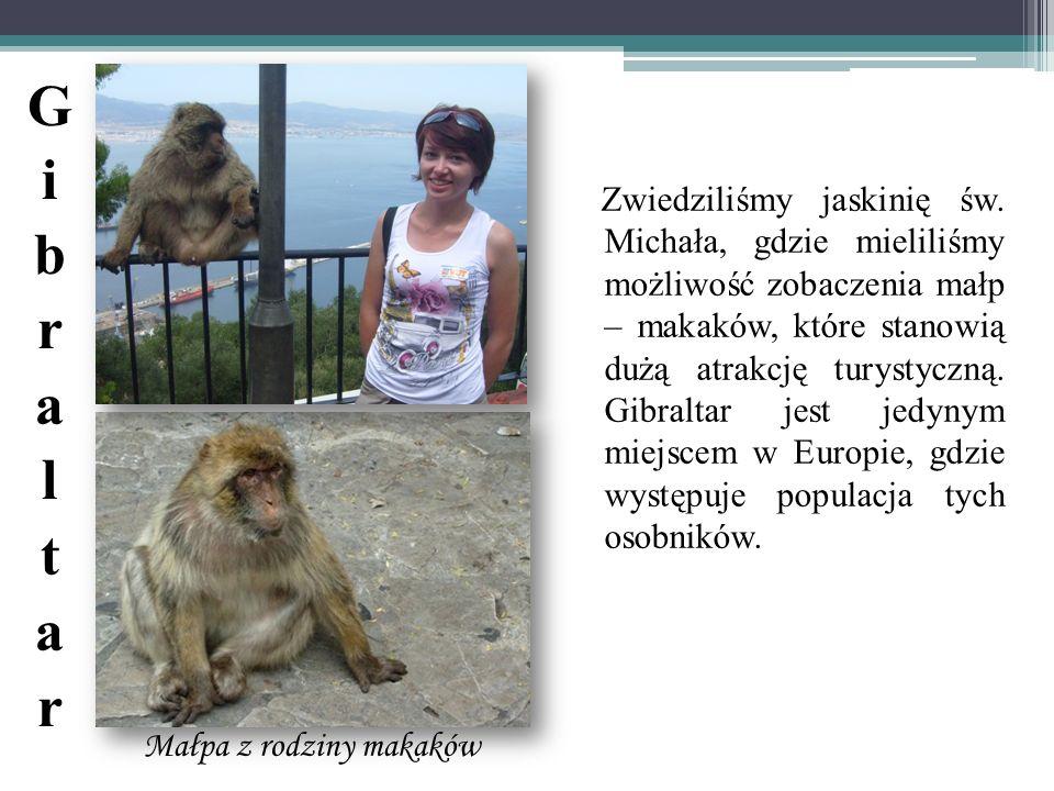 Małpa z rodziny makaków