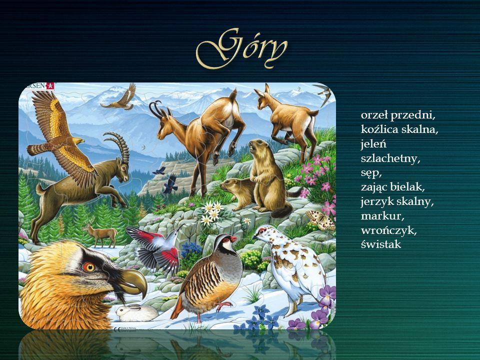 Góry orzeł przedni, koźlica skalna, jeleń szlachetny, sęp,