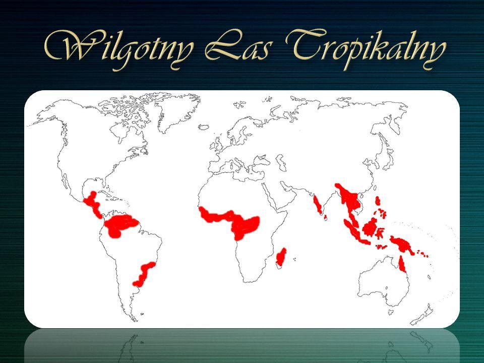 Wilgotny Las Tropikalny