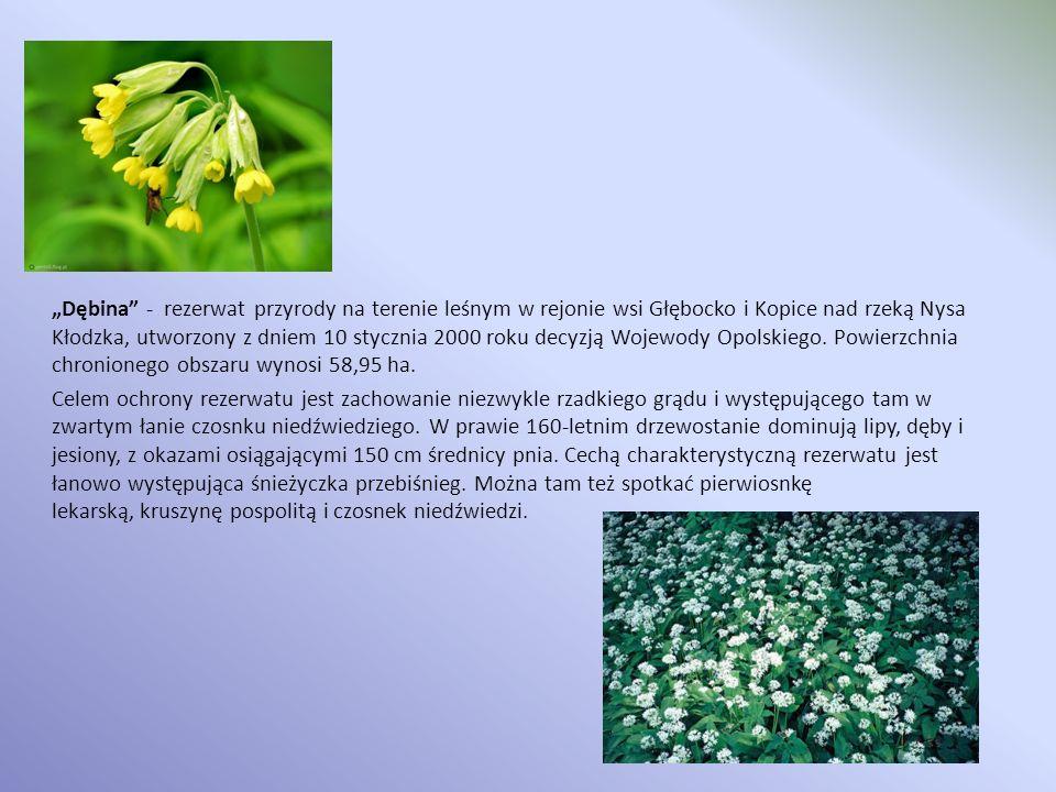 """""""Dębina - rezerwat przyrody na terenie leśnym w rejonie wsi Głębocko i Kopice nad rzeką Nysa Kłodzka, utworzony z dniem 10 stycznia 2000 roku decyzją Wojewody Opolskiego."""