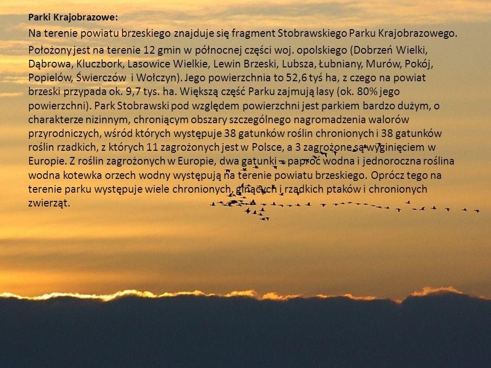 Parki Krajobrazowe: Na terenie powiatu brzeskiego znajduje się fragment Stobrawskiego Parku Krajobrazowego.