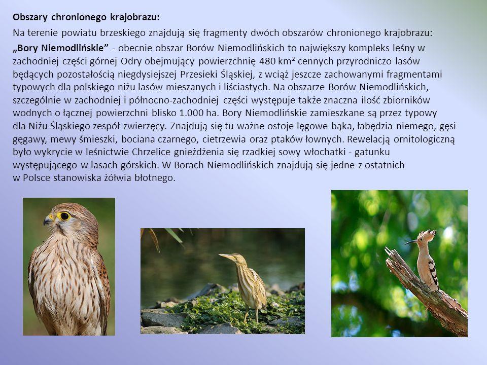 """Obszary chronionego krajobrazu: Na terenie powiatu brzeskiego znajdują się fragmenty dwóch obszarów chronionego krajobrazu: """"Bory Niemodlińskie - obecnie obszar Borów Niemodlińskich to największy kompleks leśny w zachodniej części górnej Odry obejmujący powierzchnię 480 km² cennych przyrodniczo lasów będących pozostałością niegdysiejszej Przesieki Śląskiej, z wciąż jeszcze zachowanymi fragmentami typowych dla polskiego niżu lasów mieszanych i liściastych."""