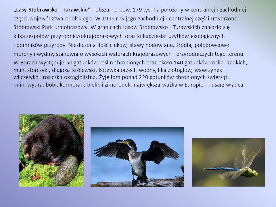 """""""Lasy Stobrawsko - Turawskie - obszar o pow. 179 tys"""