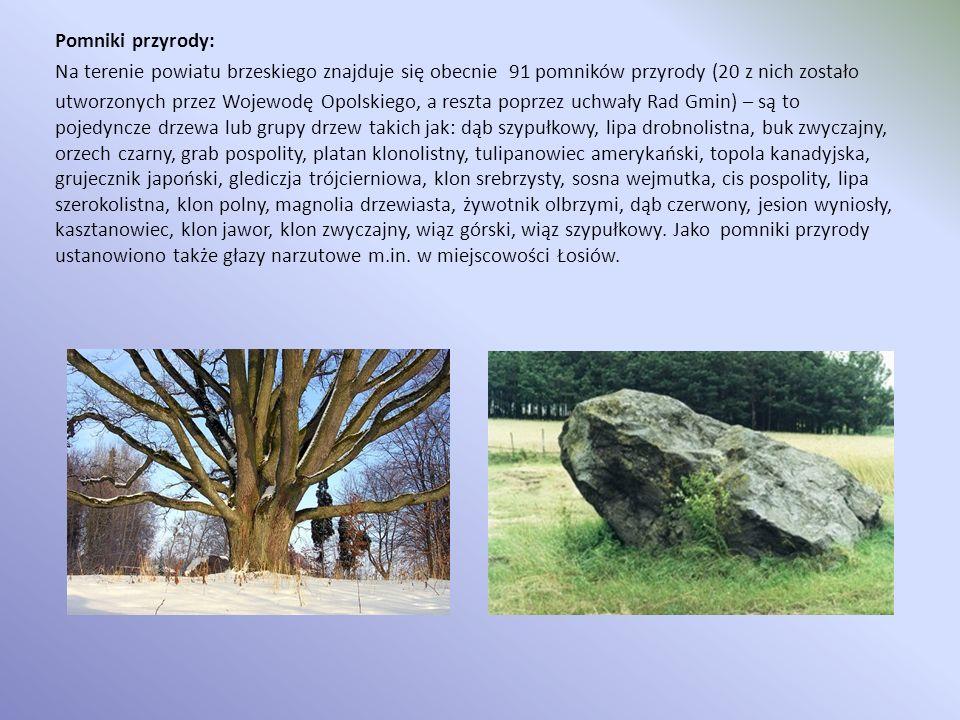 Pomniki przyrody: Na terenie powiatu brzeskiego znajduje się obecnie 91 pomników przyrody (20 z nich zostało utworzonych przez Wojewodę Opolskiego, a reszta poprzez uchwały Rad Gmin) – są to pojedyncze drzewa lub grupy drzew takich jak: dąb szypułkowy, lipa drobnolistna, buk zwyczajny, orzech czarny, grab pospolity, platan klonolistny, tulipanowiec amerykański, topola kanadyjska, grujecznik japoński, glediczja trójcierniowa, klon srebrzysty, sosna wejmutka, cis pospolity, lipa szerokolistna, klon polny, magnolia drzewiasta, żywotnik olbrzymi, dąb czerwony, jesion wyniosły, kasztanowiec, klon jawor, klon zwyczajny, wiąz górski, wiąz szypułkowy.