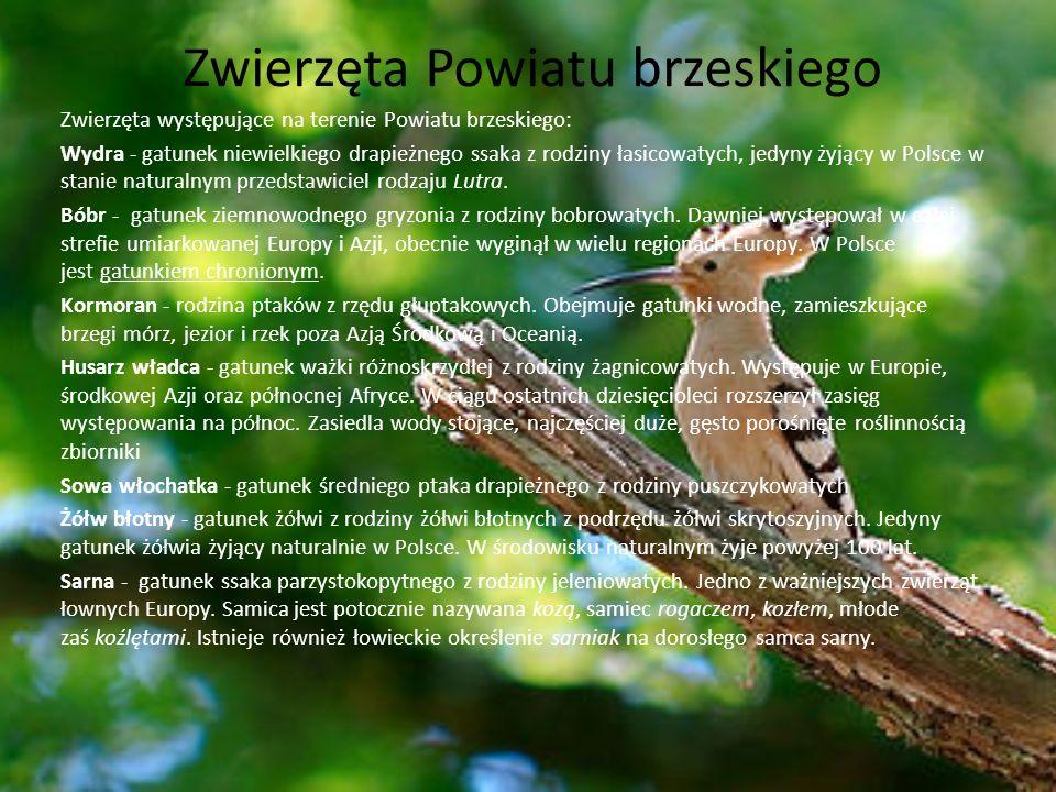 Zwierzęta Powiatu brzeskiego