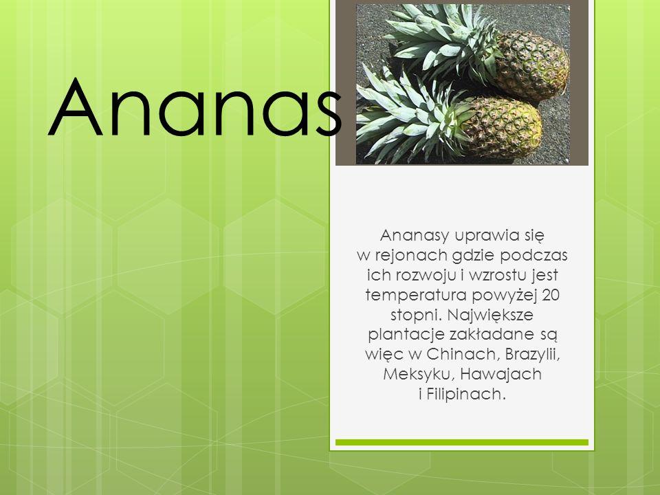 Ananas Ananasy uprawia się