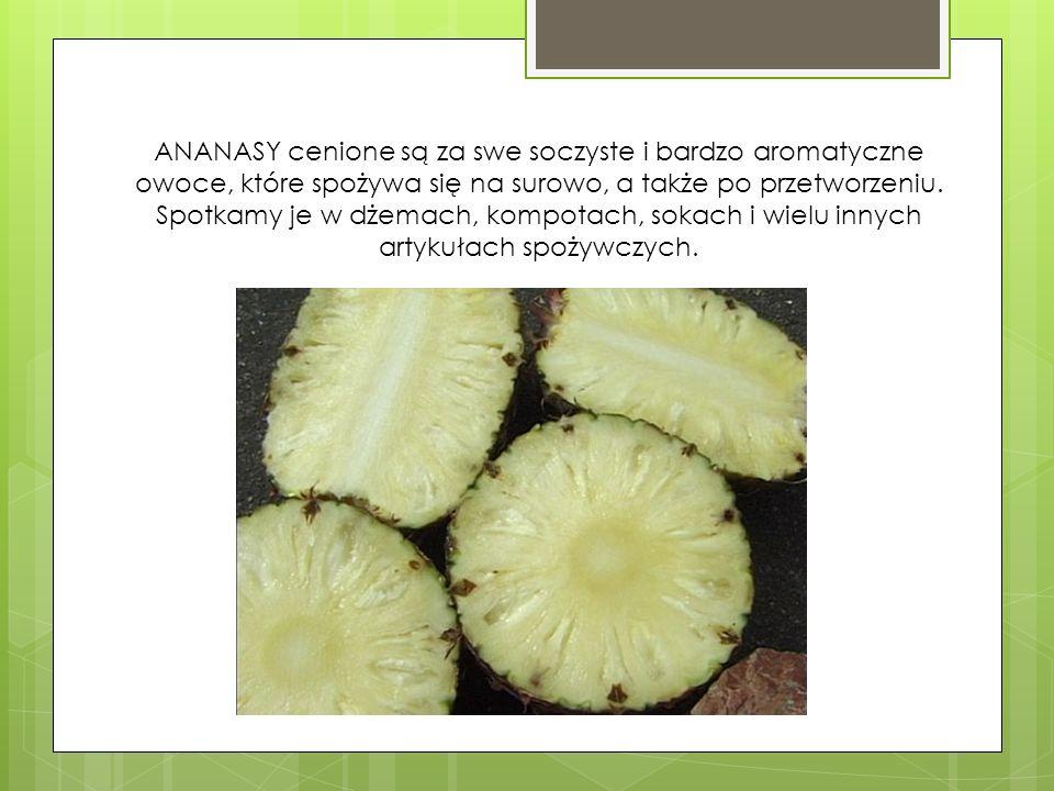 ANANASY cenione są za swe soczyste i bardzo aromatyczne owoce, które spożywa się na surowo, a także po przetworzeniu.