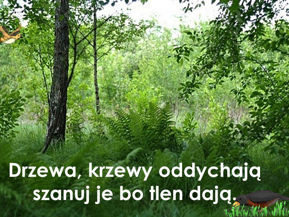 Drzewa, krzewy oddychają