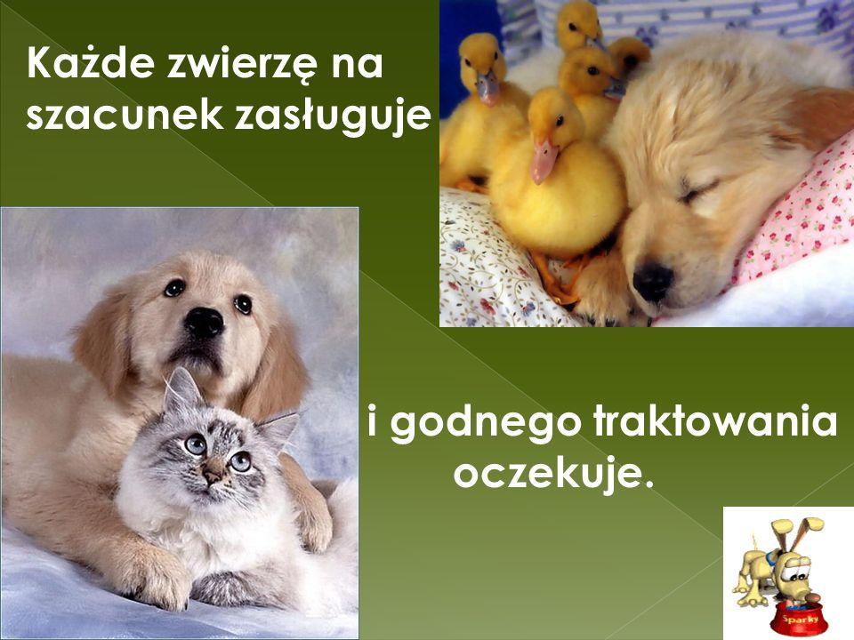 Każde zwierzę na szacunek zasługuje i godnego traktowania oczekuje.