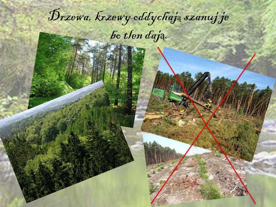 Drzewa, krzewy oddychają szanuj je bo tlen dają.