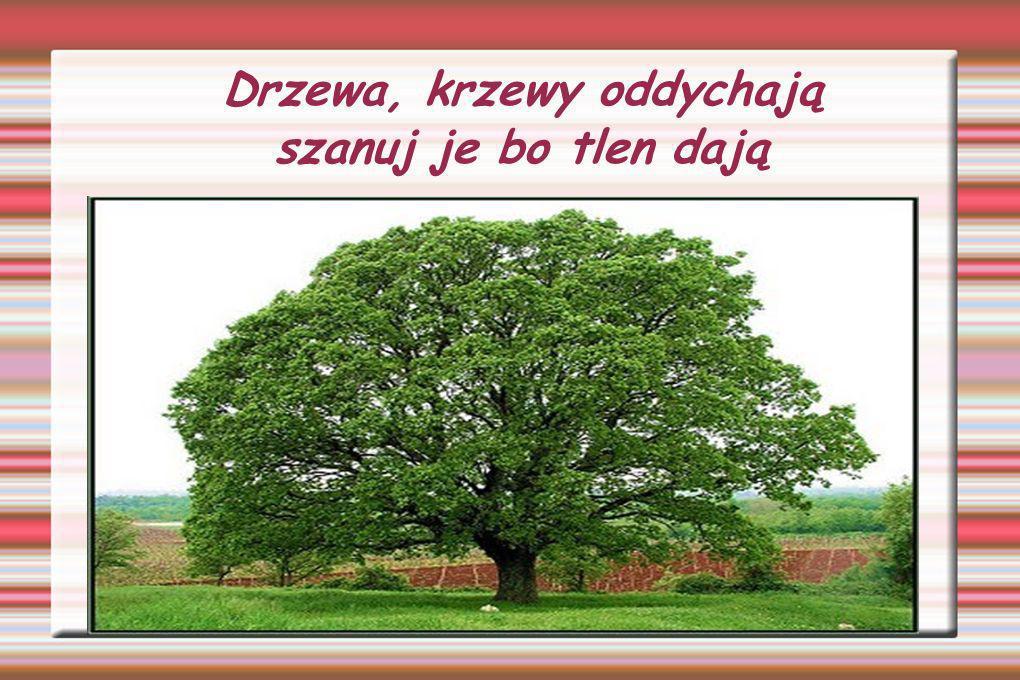 Drzewa, krzewy oddychają szanuj je bo tlen dają