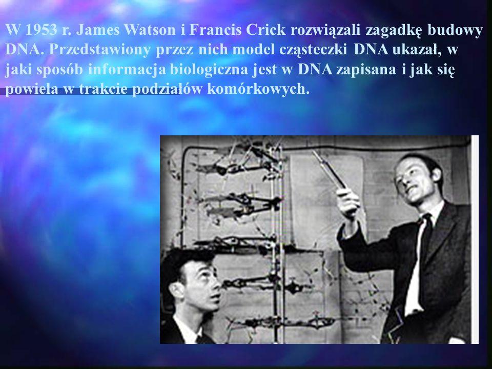 W 1953 r. James Watson i Francis Crick rozwiązali zagadkę budowy DNA