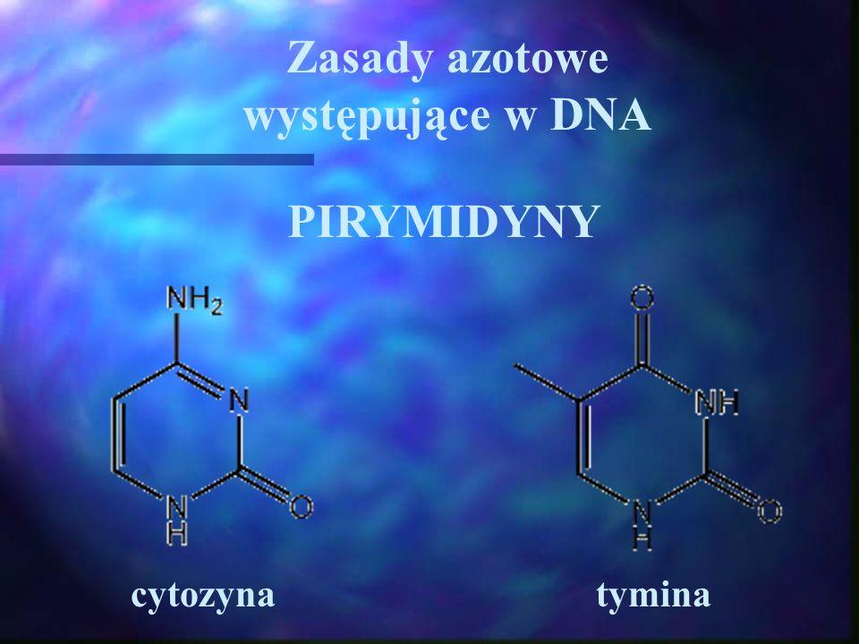 Zasady azotowe występujące w DNA