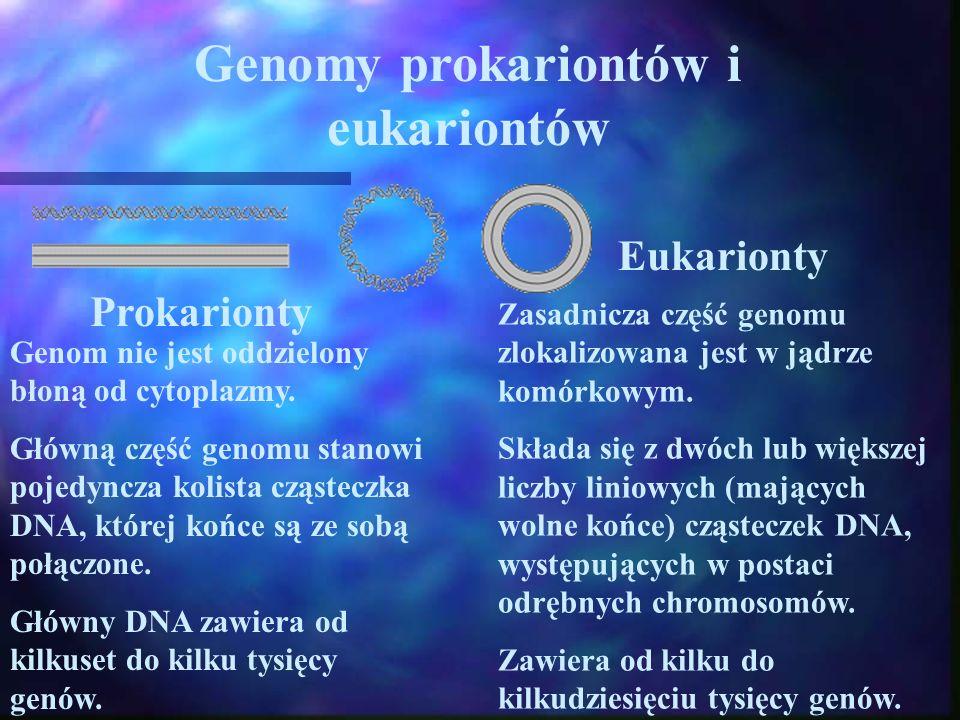 Genomy prokariontów i eukariontów