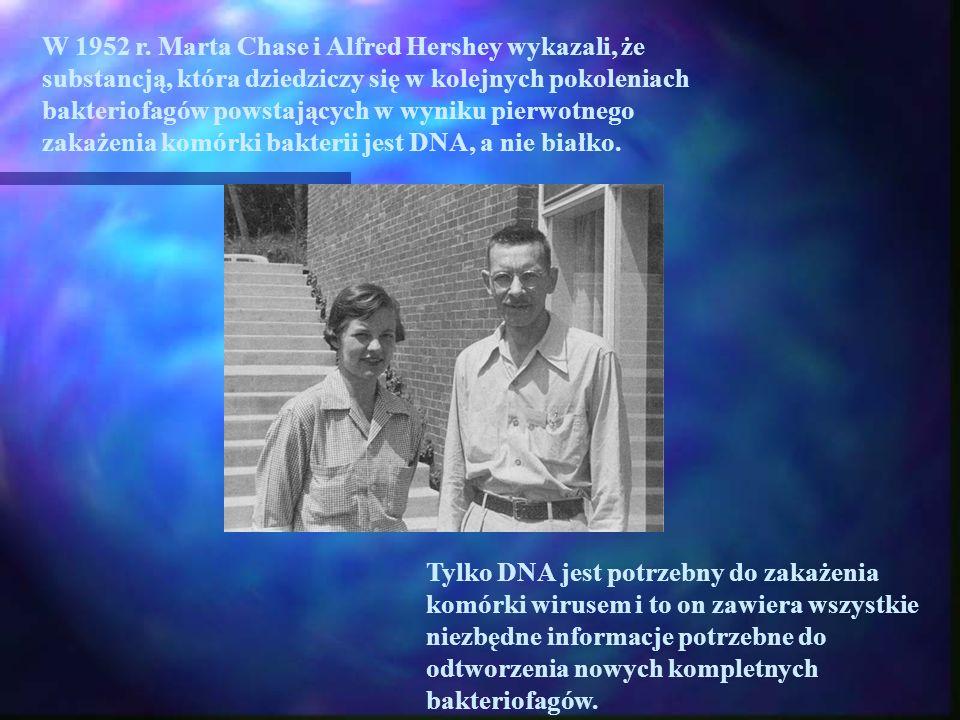 W 1952 r. Marta Chase i Alfred Hershey wykazali, że substancją, która dziedziczy się w kolejnych pokoleniach bakteriofagów powstających w wyniku pierwotnego zakażenia komórki bakterii jest DNA, a nie białko.