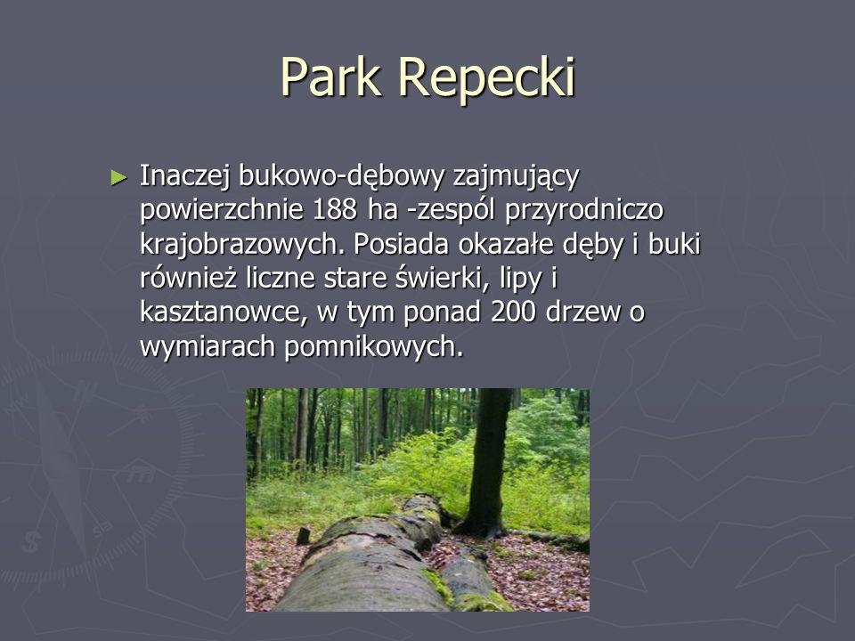 Park Repecki