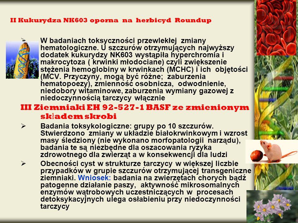 II Kukurydza NK603 oporna na herbicyd Roundup