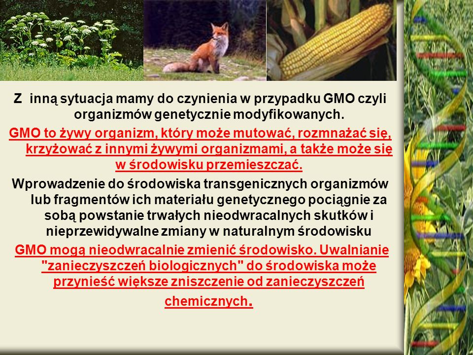 . Z inną sytuacja mamy do czynienia w przypadku GMO czyli organizmów genetycznie modyfikowanych.