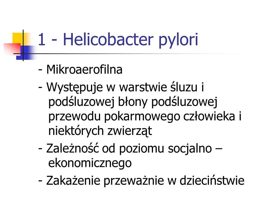 1 - Helicobacter pylori - Mikroaerofilna
