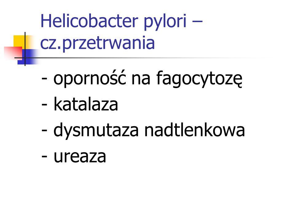 Helicobacter pylori – cz.przetrwania