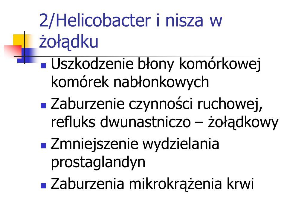 2/Helicobacter i nisza w żołądku