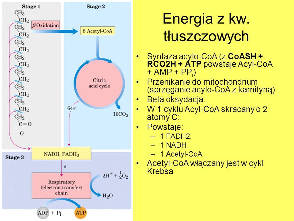 Energia z kw. tłuszczowych