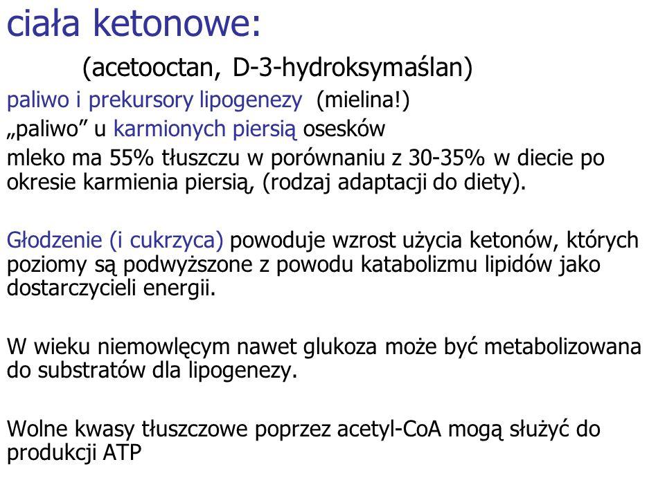 ciała ketonowe: (acetooctan, D-3-hydroksymaślan)