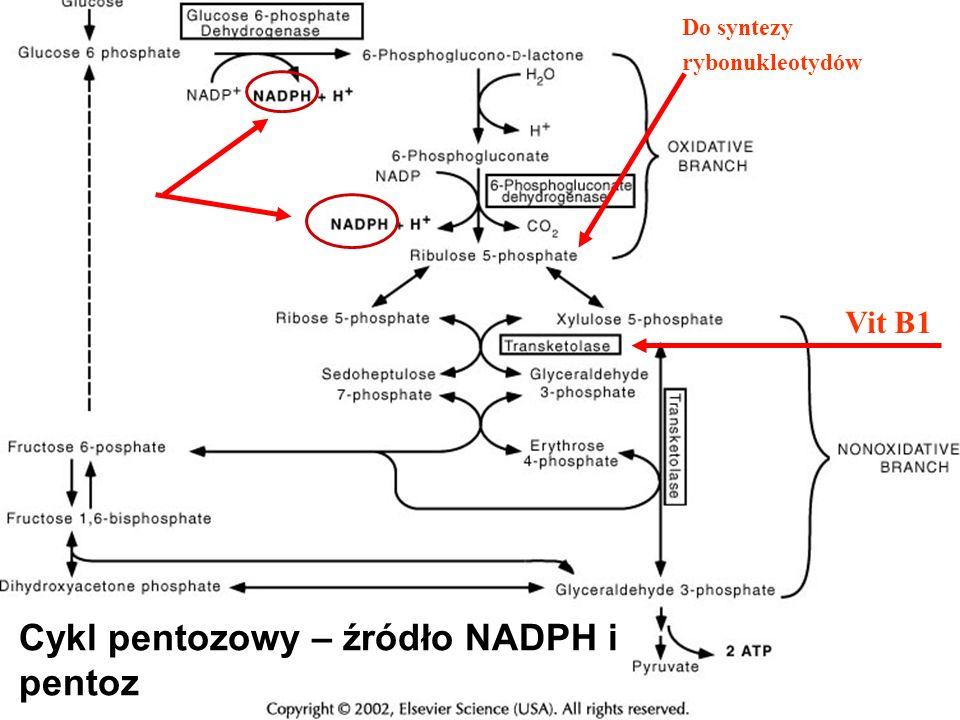 Cykl pentozowy – źródło NADPH i pentoz
