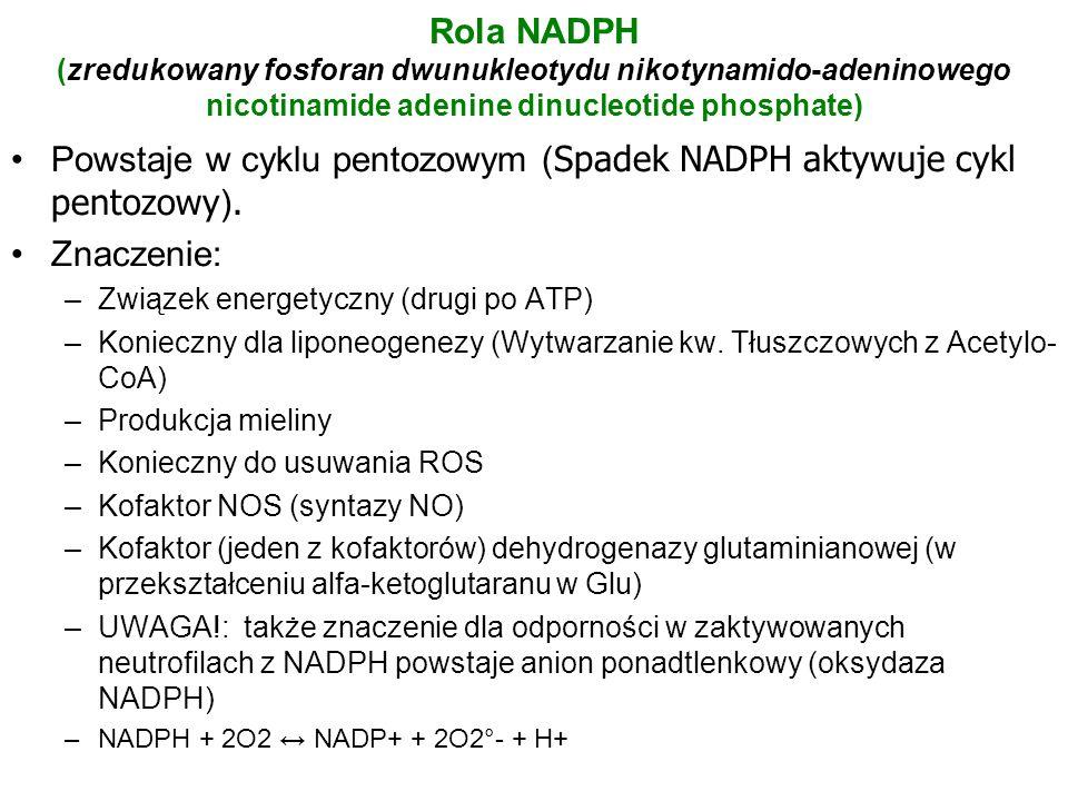 Powstaje w cyklu pentozowym (Spadek NADPH aktywuje cykl pentozowy).
