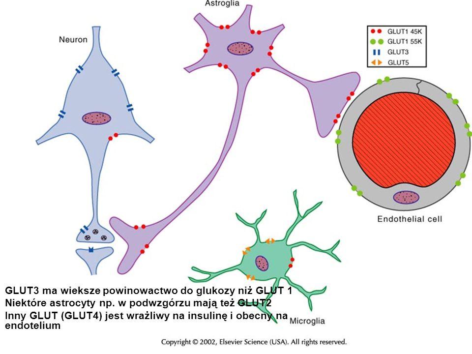 GLUT3 ma wieksze powinowactwo do glukozy niż GLUT 1