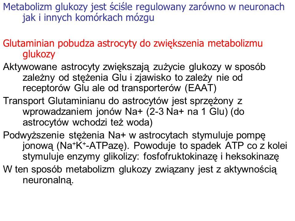 Metabolizm glukozy jest ściśle regulowany zarówno w neuronach jak i innych komórkach mózgu