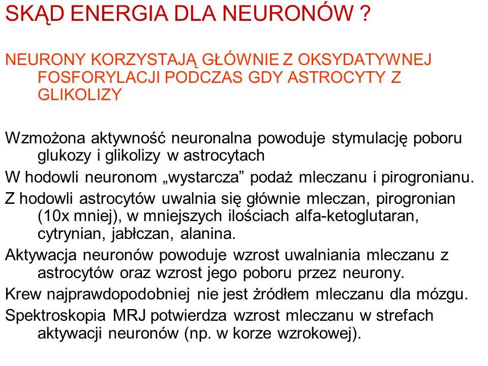 SKĄD ENERGIA DLA NEURONÓW