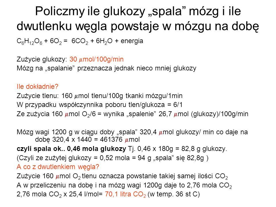 """Policzmy ile glukozy """"spala mózg i ile dwutlenku węgla powstaje w mózgu na dobę"""