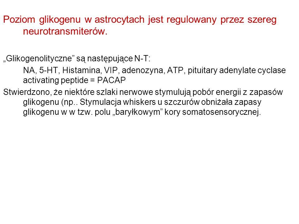 Poziom glikogenu w astrocytach jest regulowany przez szereg neurotransmiterów.