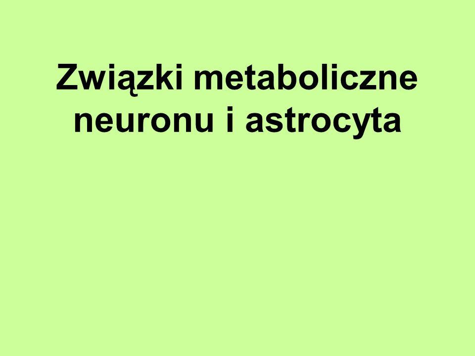 Związki metaboliczne neuronu i astrocyta