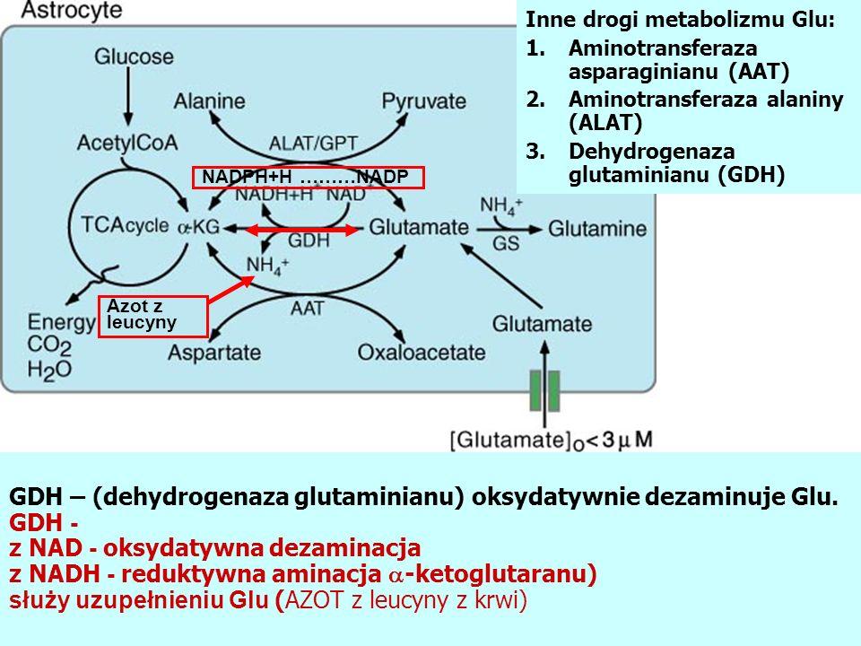 Inne drogi metabolizmu Glu: