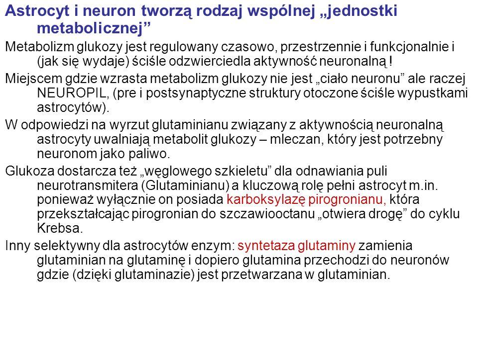 """Astrocyt i neuron tworzą rodzaj wspólnej """"jednostki metabolicznej"""