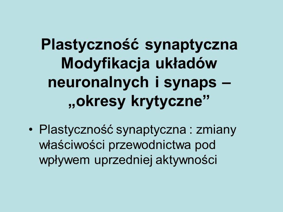 """Plastyczność synaptyczna Modyfikacja układów neuronalnych i synaps – """"okresy krytyczne"""